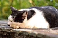 地域保護猫