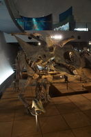 福井県立恐竜博物館(化石、恐竜骨格標本)