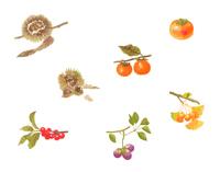 秋の植物 いろいろ セット
