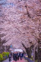 霞が関の桜並木道