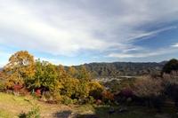 紅葉の宝登山から見た町