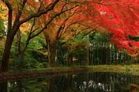 世界遺産 紅葉の中尊寺