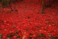 紅葉の花巻温泉旧松雲閣
