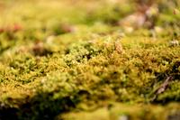 苔のイメージ