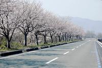 【滋賀県】桜が咲くサイクリングロード