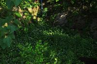 6月の大阪城内の緑