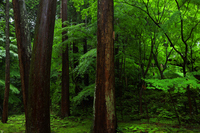 松峰山 金剛輪寺の新緑