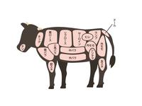牛の部位 図解イラスト