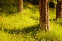 夕暮れの森林 イメージ素材