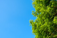 青空 空 雲 夏の空 背景 背景素材 8月 コピースペース
