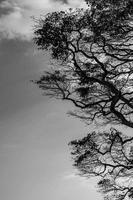 空へ伸びる枝