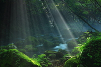 光芒射す夏の元滝伏流水
