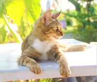 横を向いて座っている猫ちゃん