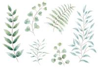 植物の水彩イラストセット