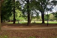 初秋の砧公園を犬を連れて散歩する人