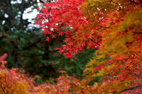 久保原の紅葉