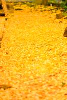 長壽寺の紅葉