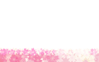 春の背景素材、桜のフレーム背景、下