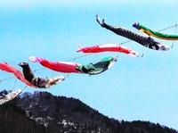 定山渓温泉を泳ぐ鯉のぼり