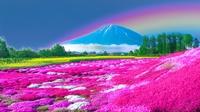 芝ざくらに架かる七色の虹