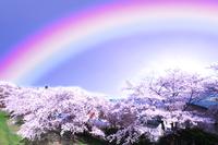 桜並木に架かる七色の虹