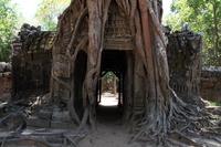 タ・ソム 東塔門と大木 (カンボジア アンコール)