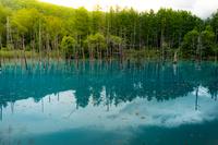 白金青い池(北海道美瑛町)