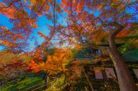 鮮やかな紅葉と日本家屋