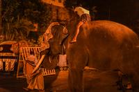 スリランカの象(スリランカ・キャンディ)のイメージ