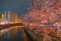 大岡川プロムナードの夜桜のイメージ