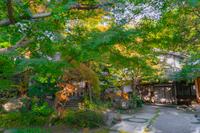 円覚寺の新緑と夕暮れ