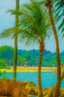 シンガポール・セントーサ島のヤシの木