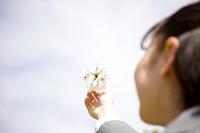 桜の花びらを空に翳す女子高生