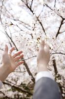 桜に手を差し伸べる女子高生の手元