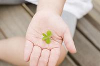 三つ葉を持つ子供の手
