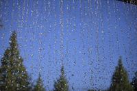 水滴と樹木