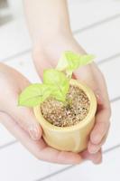手と鉢植え
