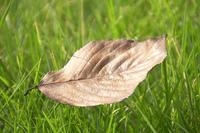芝生と落ち葉