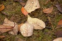 落葉と水滴