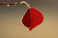 雨に輝く葉