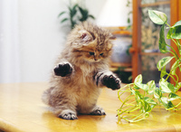立ちポーズの子猫