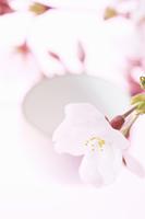 桜の花びらとお酒