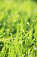 水滴と新緑