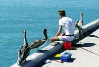 釣り人とペリカン