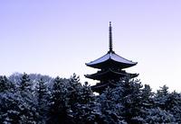 雪の興福寺五重塔