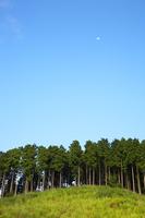 杉の木と月