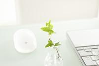 ノートパソコンと観葉植物