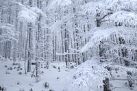 雪の付いた木々
