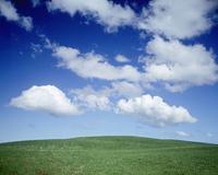 帯広の草原