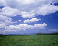 中標津の草原